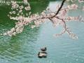 公园池塘 (2)