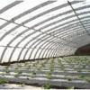 大棚骨架日光温室生态餐厅