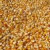 大量求购玉米,小麦,大豆,高粱等饲料原料