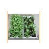 花盆--懒人屋顶绿化专用