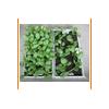 多功能双层自灌溉栽培床