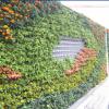 上海国庆花墙首选|自灌溉双孔套装|墙体绿化