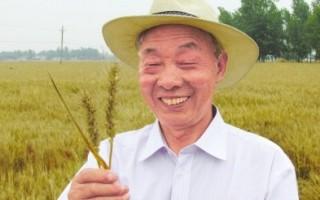 """我愿成为一粒种子 ——记农技推广研究员、中国第十八届农高会""""后稷特别奖""""获得者刘世扬"""