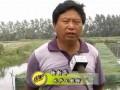 仙桃水产专家指导黄鳝投苗后管理要点 (342播放)
