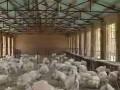 美国尼古拉火鸡养殖技术 (382播放)