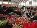 云南花卉交易市场 (4)