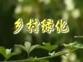 乡村绿化 (226播放)