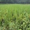 微生物肥料实行全国推广