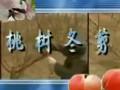 桃树冬剪剪技术 (281播放)