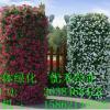 上海外滩国庆花墙指定产品|单孔套装|花墙|花柱|立体蔬菜墙