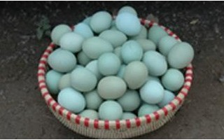 绿壳鸡蛋的营养价值