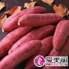 红薯生产批发基地