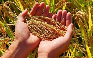 国家粮食局指出,我国每年粮食损失超1000亿斤