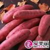 红薯批发基地