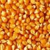 吉海畜禽长期采购大豆大麦玉米棉粕
