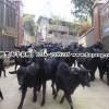 农村投资什么养殖业好湖南养羊合作项目