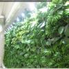 墙上花园  植物墙  墙体绿化 立体种植 生态观光 立体绿化