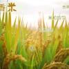 神农稻花香米