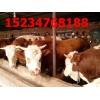 急急急合作社转型低价出售肉牛