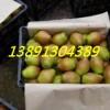 陕西冷库红香酥梨产地库尔香梨产地陕西冷库箱装红香酥梨产地
