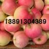 陕西早熟苹果价格陕西藤木苹果基地美八苹果行情夏红苹果代办