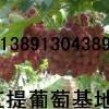 陕西红提葡萄代办陕西红提葡萄价格陕西红提葡萄基地产地行情