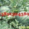 陕西大棚西瓜基地大量上市/京新西瓜/8424西瓜产地最新价格