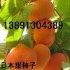 陕西柿子基地价格\陕西甜柿子产地批发价格