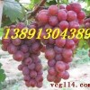 陕西红提葡萄种植基地批发最新价格