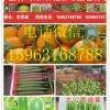 免费代收莘县各种洋香瓜甜瓜