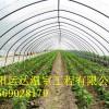 镀锌钢管大棚建造成本安徽蔬菜大棚建造