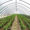 大棚建造椭圆管骨架济南蔬菜大棚建造基地