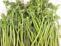 取柴河山野菜