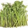 山野采-蕨菜