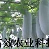 迷你小冬瓜种子 观赏食用蔬菜种子