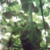 鹤首葫芦种子