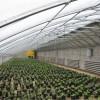 清丰县温室大棚建造中心运达建造几字钢温室