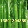 陕西青辣椒基地批发,陕西辣椒产地批发价格