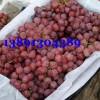 陕西雨棚红提葡萄产地价格,雨棚红提葡萄最新价格