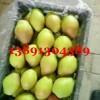 近期陕西冷库红香酥梨产地批发价格走势