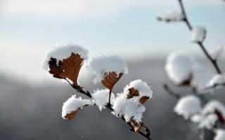 呼伦贝尔:雪淞压枝头