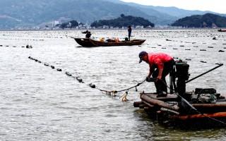 福建霞浦:渔民海上忙冬播