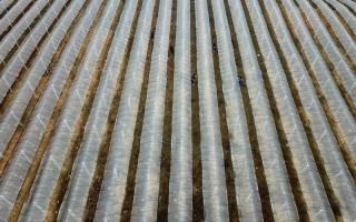 贵州丹寨:葡萄园里冬管忙