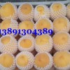 黄金蜜毛桃价格-陕西纸袋黄金蜜毛桃产地上市价格